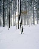 Forest Landscape Switzerland Aargau Zetzwil-Schnee lizenzfreie stockfotografie