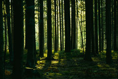 Forest landscape with trees Stock Photography
