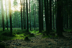 Forest landscape with trees Stock Image
