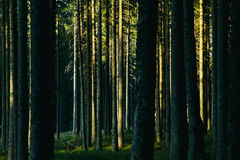 Forest landscape with trees Stock Photos
