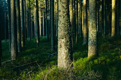Forest landscape with trees Royalty Free Stock Photos