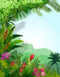 Forest landscape of tropical background with sunrays Royalty Free Stock Photos