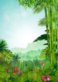 Forest landscape of tropical background with sunrays Royalty Free Stock Image