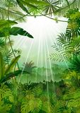 Forest landscape of tropical background with sunrays Stock Photos