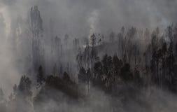 Forest Landscape After um fogo imagem de stock