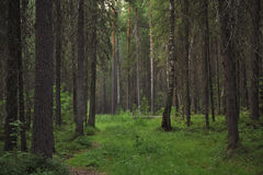 Forest landscape Royalty Free Stock Photography