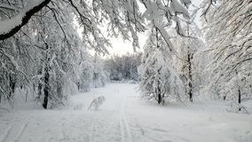 Forest landscape in winter after snowfall. Forest landscape at winter after snowfall stock video