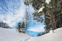 Forest landscape in winter, it snows Stock Images