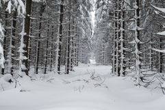 Forest Landscape in Winter Stock Photography