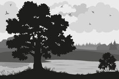 Forest Landscapes Silhouettes. Evening Forest Landscape, Oak Trees, Bushes and Grass on the River Bank and Birds in the Cloudy Sky, Black and Grey Silhouettes on Royalty Free Stock Image
