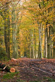 Forest lane. Muddy forest lane in an autumnal forest Royalty Free Stock Photography
