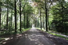 Forest lane foothpath in Holland Stock Photo