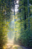 Forest lane Royalty Free Stock Images