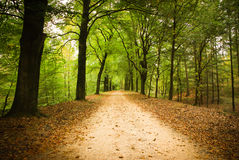 Forest lane. In Loenen veluwe royalty free stock photo