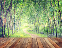 Forest Lane que encanta en una plantación del árbol de goma foto de archivo
