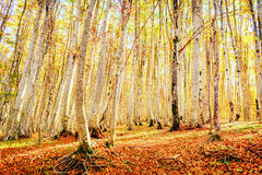 Forest Lanscape. Forest in the autumn in Montenegro royalty free stock photography