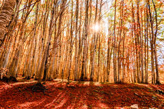 Forest Lanscape. Landscape of the Forest in Autumn Stock Photos