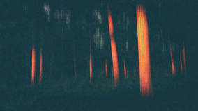 Forest with last rays of sun with blur and textures added. Forest with last rays of the sun with blur and textures added royalty free stock photography