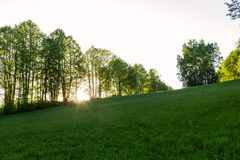 Forest with the last of the sun shining through the trees. royalty free stock image