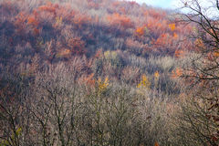 Forest in late autumn. Most of the trees without any leaves but some with colorful (brown, yellow, orange) leaves Royalty Free Stock Photo