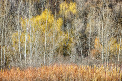 Forest in late fall at Scarborough Bluffs Royalty Free Stock Photo