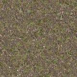 Forest Lawn med grönt och torrt gräs Arkivfoto