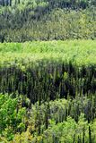 Alaska- Green on Green Forest Layers in Alaska, USA royalty free stock photo
