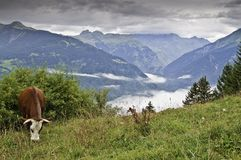 The forest of Le Praz Stock Image