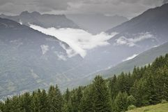 The forest of Le Praz Royalty Free Stock Photos