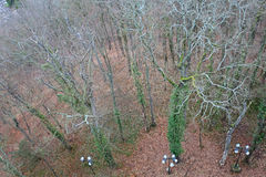 Forest in Le Puy-en-Valay from above. France Royalty Free Stock Images