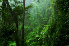 Forest, Leaf optical effect. Forest on the mountain, Chiang Mai, Thailand, Asia Stock Image