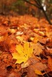 Forest leaf Stock Images