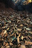Forest leaves Royalty Free Stock Image