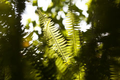 Forest leaves. Forest leafes with sun light background Royalty Free Stock Photos