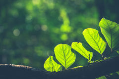 Forest leaves Stock Photography