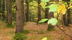 Forest leaves Royalty Free Stock Photo
