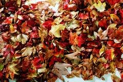 Forest leaves on white floor Stock Photo
