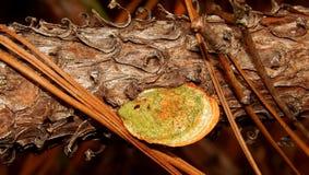 Forest Legume alaranjado e verde Fotos de Stock Royalty Free