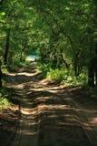Forest Letea Fotografía de archivo
