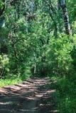Forest Letea Imagen de archivo