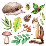 Forest life watercolor set. Illustration on white background with hedgehogs, chipmunk, beetle, mushroom and leaves. royalty free illustration