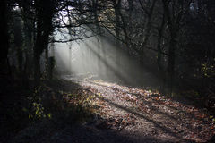 Forest light. Through the trees Stock Photo