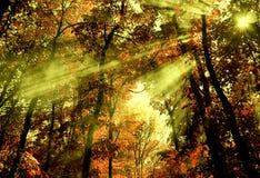 Forest Light Imagens de Stock