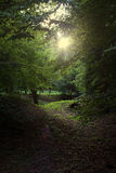 Forest Light Stockfotografie