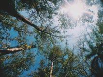 Forest Light Royalty-vrije Stock Afbeeldingen