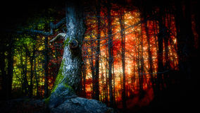 Forest Light Fotografia Stock