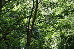 Forest Light Images libres de droits
