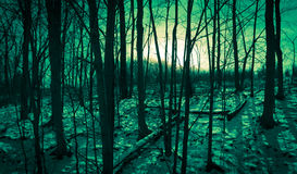 Forest Light Fotos de Stock