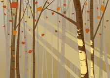 Forest light in autumn Stock Photography