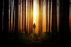 Forest, Light, Darkness, Tree Royalty Free Stock Photo